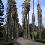 Le jardin botanique tropical