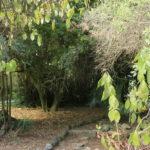 Le jardin botanic tropical